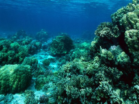 Girls Snorkeling over Reef --- Image by ? Royalty-Free/Corbis